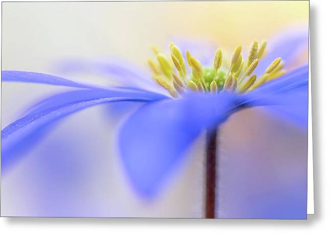Pure ... Greeting Card