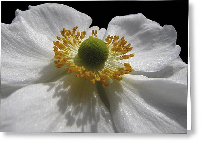 Pure As The Snow Greeting Card by Jacqi Elmslie