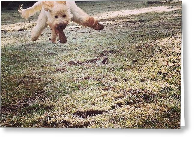 Pure Joy! Dig In The Dirt Then Run As Greeting Card