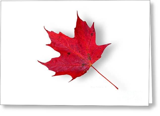 Pure Maple Leaf Joy Greeting Card