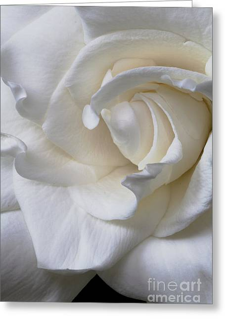 Purity All Profits Go To Hospice Of The Calumet Area Greeting Card