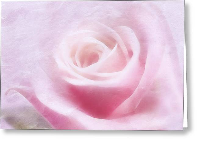 Purity And The Pink Rose Greeting Card by Georgiana Romanovna