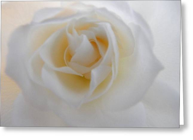 Greeting Card featuring the photograph Purity by Deb Halloran