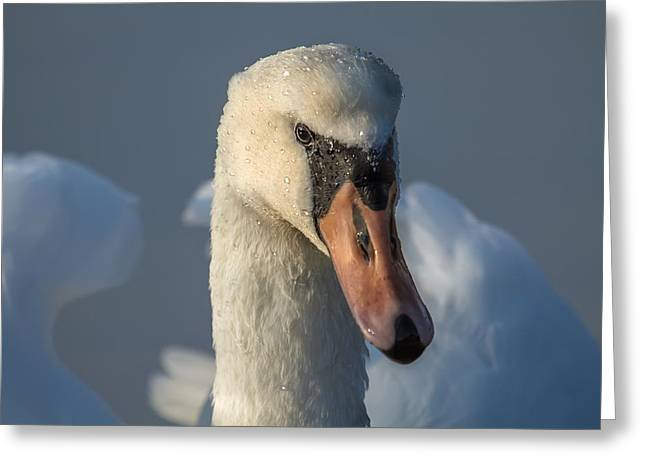 Purity In The Eyes Greeting Card by Rose-Maries Pictures
