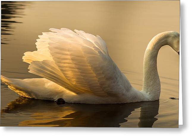 Purity Of The Soul Greeting Card by Rose-Maries Pictures