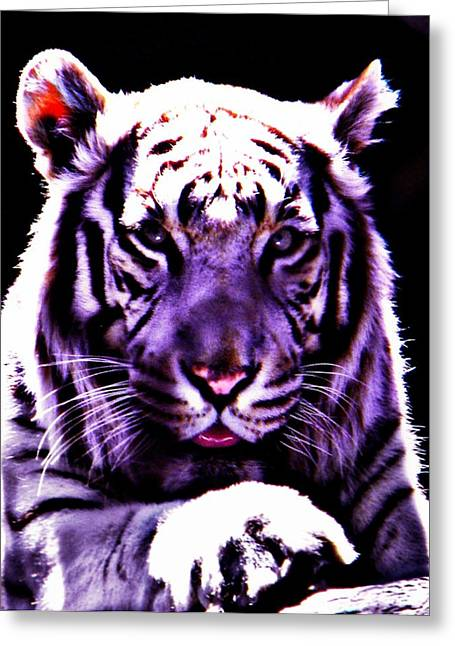 Purle Tiger Greeting Card