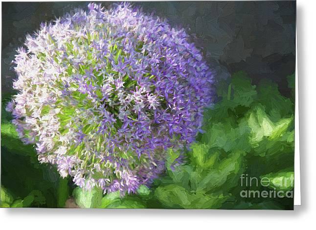 Purple Allium 1 Hollandicum Sensation  Greeting Card