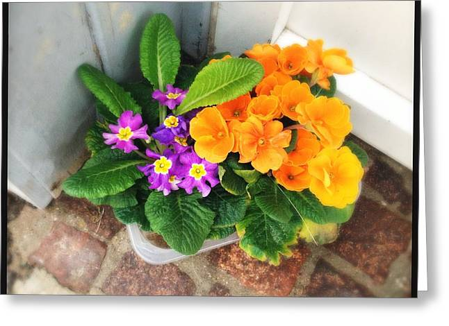 Purple And Orange Flowers Greeting Card