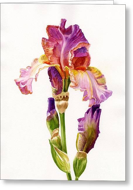 Purple And Orange Iris Greeting Card by Sharon Freeman