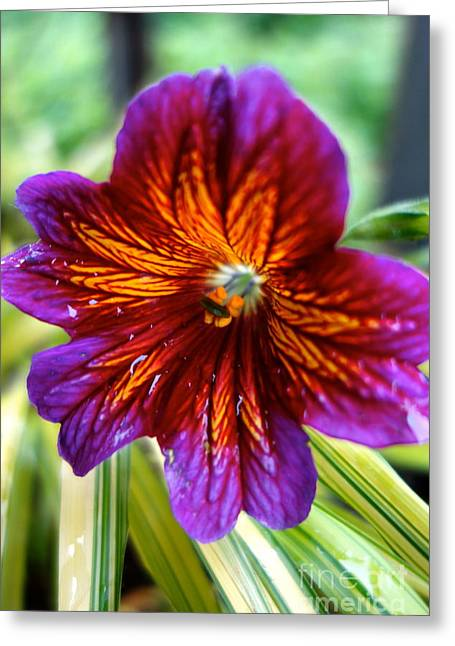 Purple And Orange Greeting Card