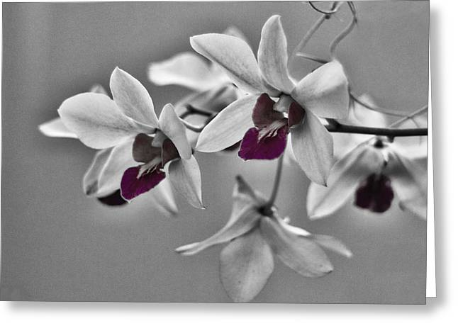 Purple And Pale Green Orchids - Black And White Greeting Card