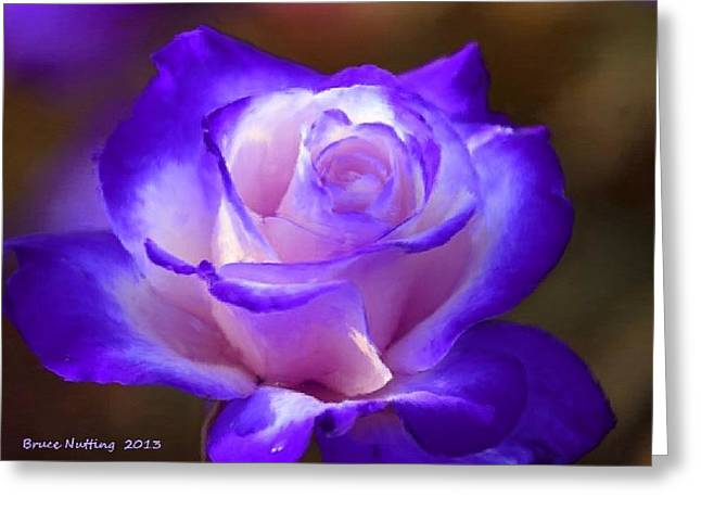Purple And Pink Rose Greeting Card by Bruce Nutting