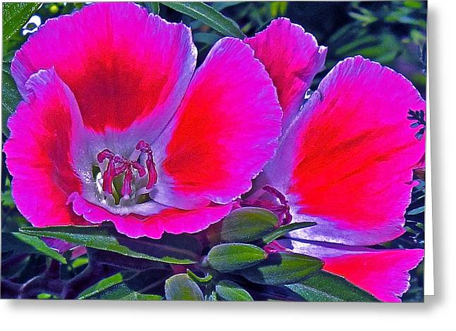 Purple And Red  Greeting Card by Martin S Gold