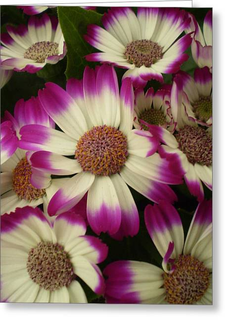 Purple And White Flowers Greeting Card by Fabian Cardon