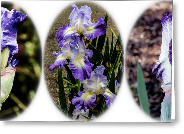 Greeting Card featuring the digital art Purple And White Irises by Photographic Art by Russel Ray Photos