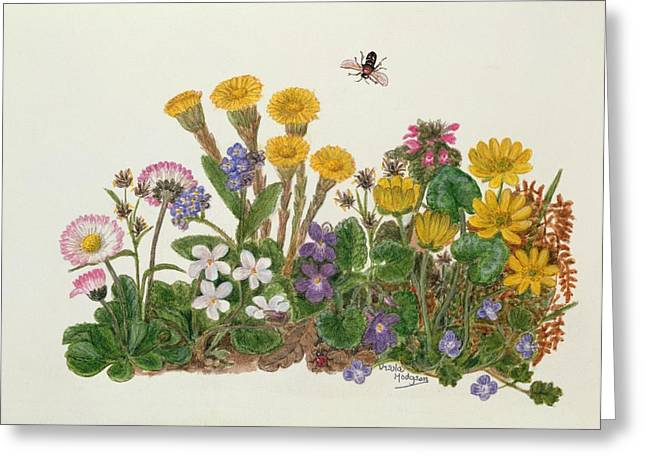 Purple And White Violets, Daisy, Celandine And Forget-me-not Wc On Paper Greeting Card by Ursula Hodgson