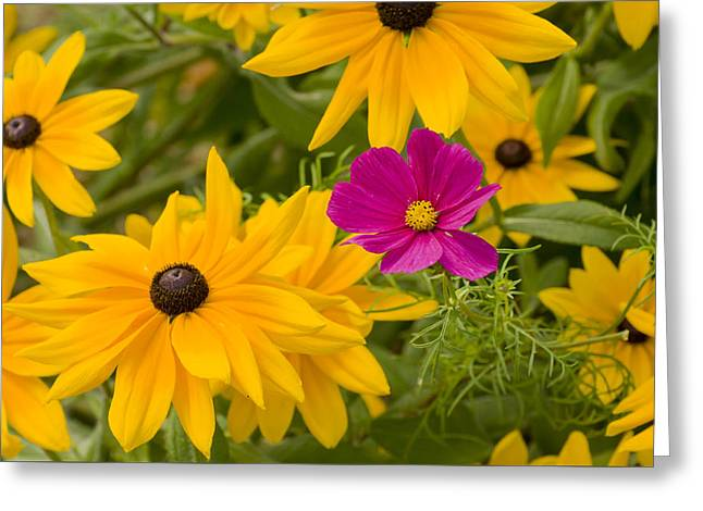 Purple And Yellow Flowers Greeting Card