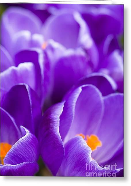Purple Greeting Card by Anne Gilbert