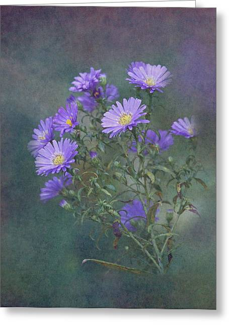 Purple Asters Greeting Card by Angie Vogel