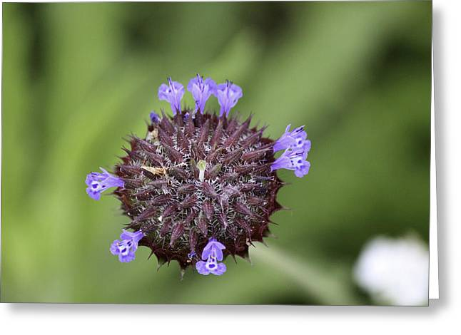 Purple Beauty Greeting Card by Luna Curran