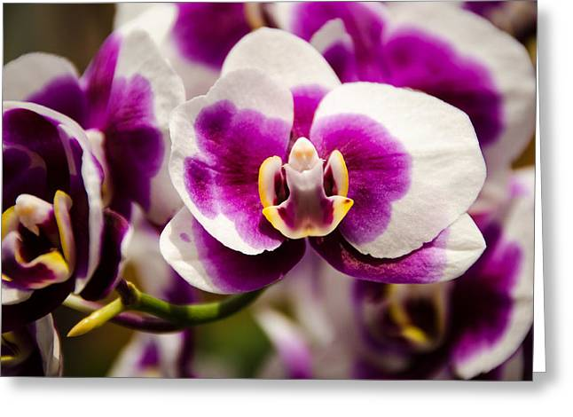 Purple Beauty Greeting Card by Penny Lisowski