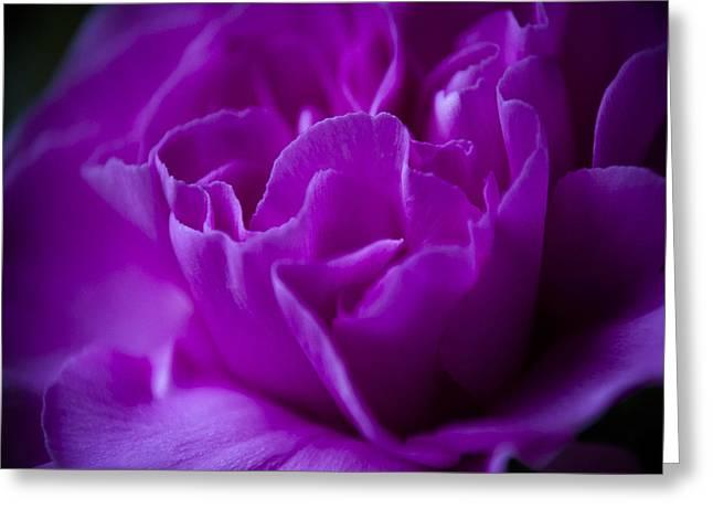 Purple Beauty Greeting Card