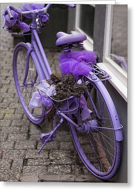 Purple Bicycle On Street, Limburg An Greeting Card