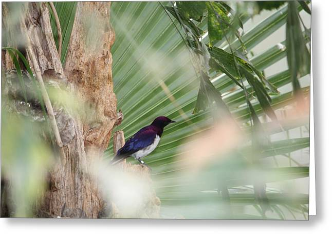 Purple Birs In Trees Greeting Card