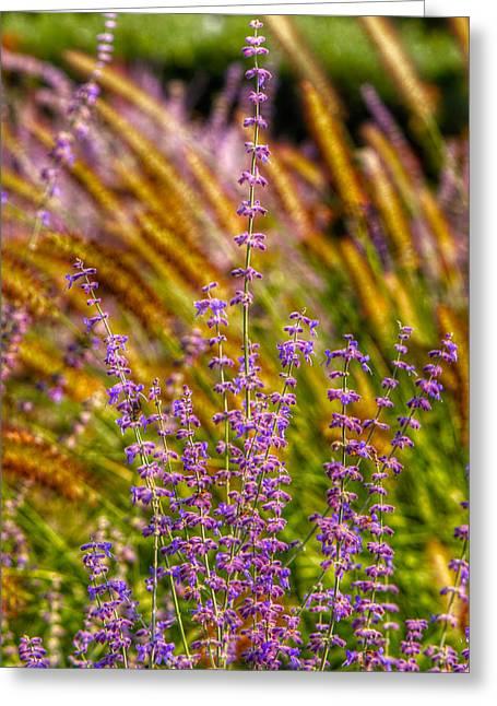 Purple Blooms Greeting Card by Kathi Isserman