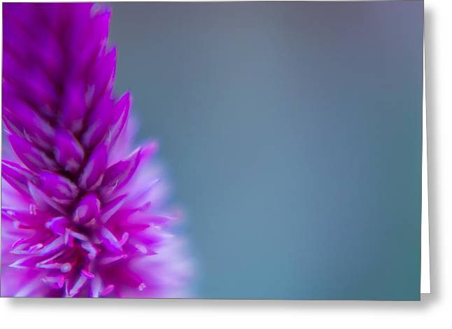 Greeting Card featuring the photograph Purple Blur by Steven Santamour