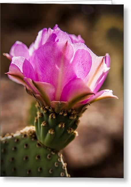 Purple Cactus Flower Greeting Card by  Onyonet  Photo Studios