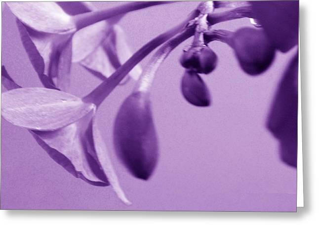 Purple Charm Greeting Card