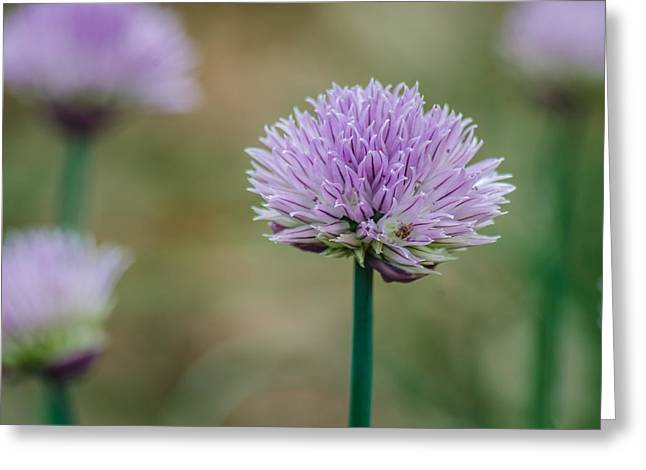 Purple Chive Garden Greeting Card by Noah Katz