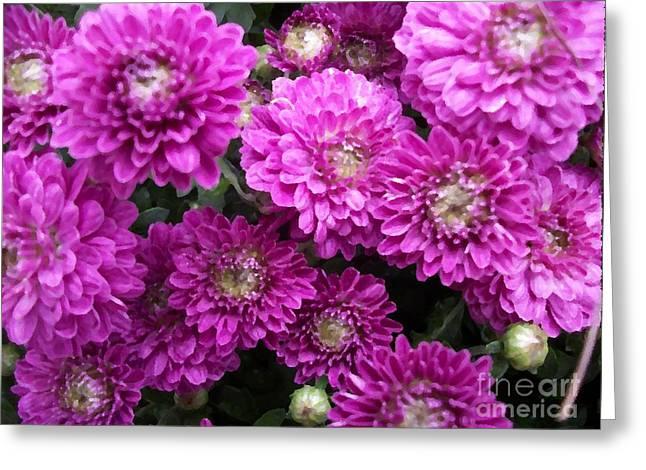 Purple Chrysanthemums Print Greeting Card