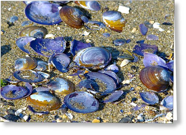 Purple Clam Shells On A Beach Greeting Card by Sharon Talson