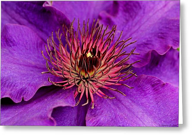 Greeting Card featuring the photograph Purple Clematis by Suzanne Stout