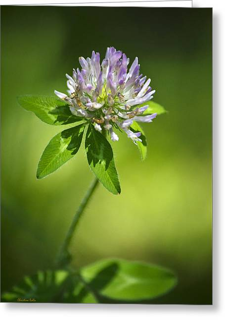 Purple Clover Flower Greeting Card by Christina Rollo