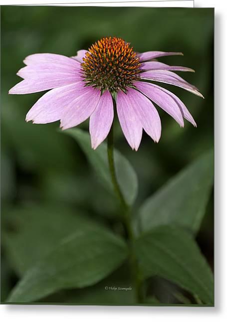 Purple Cone Flower Greeting Card