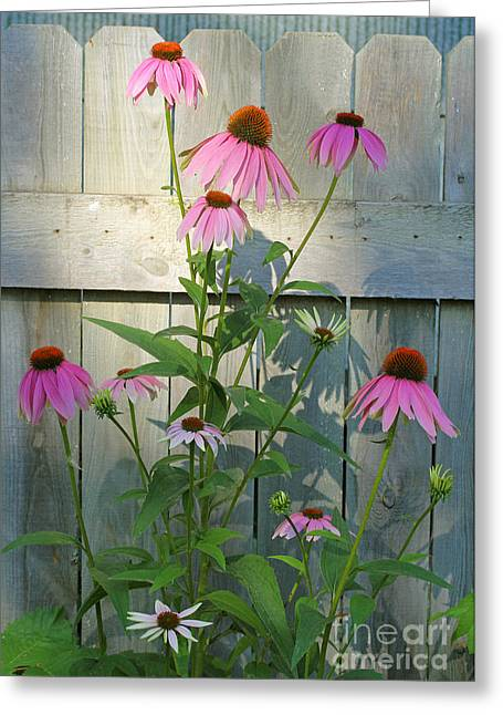 Purple Coneflower Greeting Card by Steve Augustin