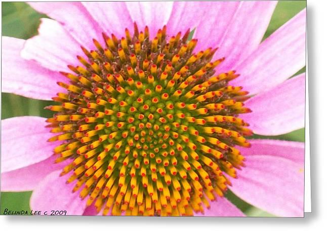 Purple Conehead Closeup Greeting Card by Belinda Lee