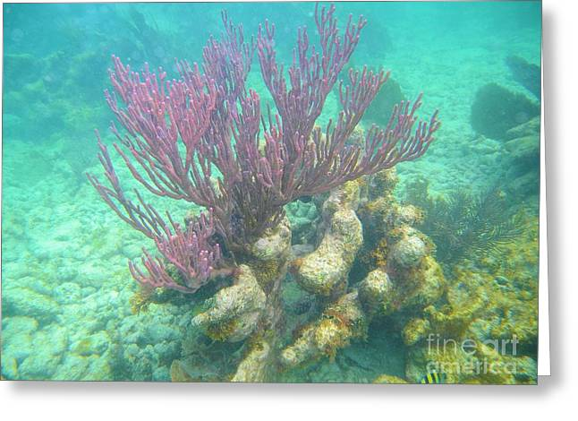 Purple Coral Greeting Card by Adam Jewell