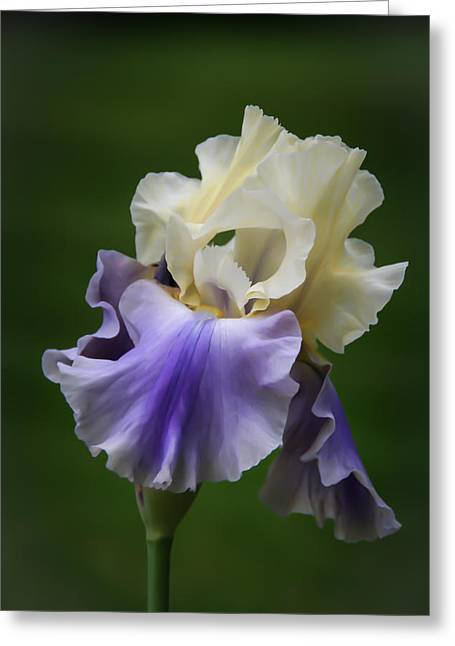 Greeting Card featuring the photograph Purple Cream Bearded Iris by Patti Deters