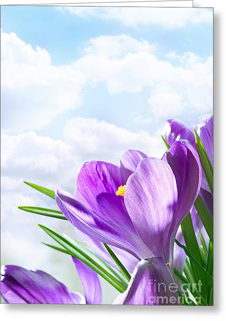 Purple Crocus Greeting Card by Boon Mee