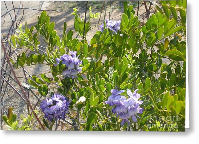 Purple Desert Flowers Greeting Card