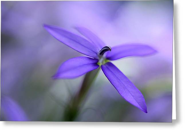 Purple Dreams Greeting Card by Annie Snel