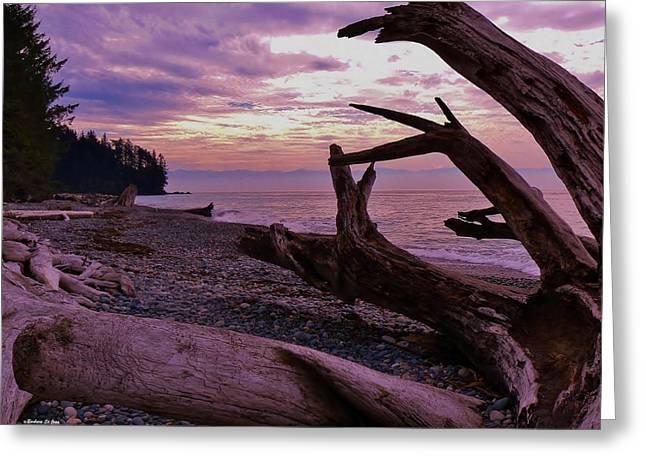 Purple Dreams In Bc Greeting Card by Barbara St Jean