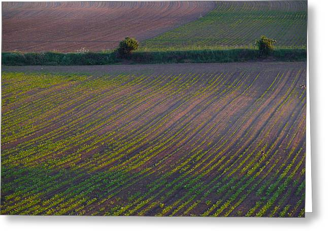 Purple Fields Greeting Card by Evelyn Tambour