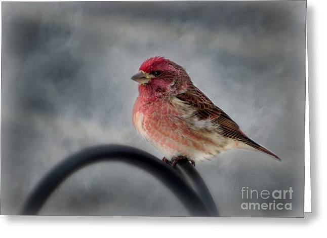 Greeting Card featuring the photograph Purple Finch by Brenda Bostic