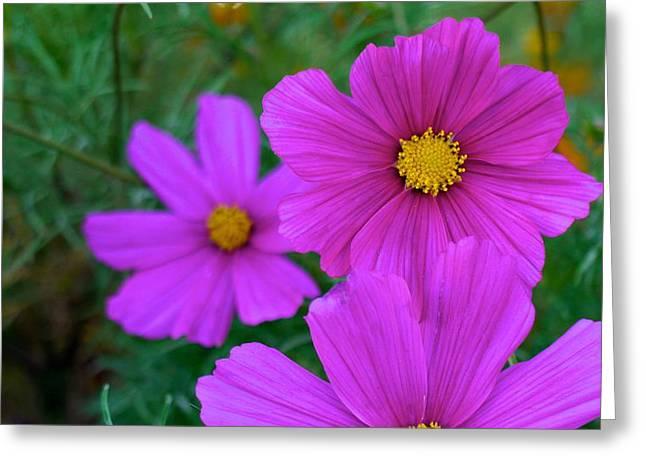 Purple Flower Greeting Card by Alex King