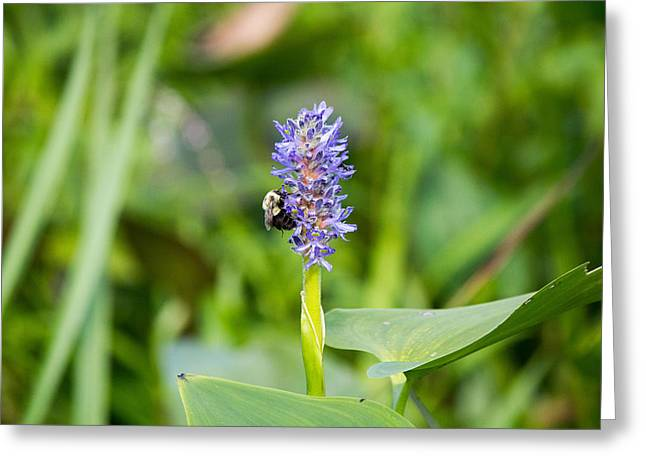 Purple Flower And Bee Greeting Card